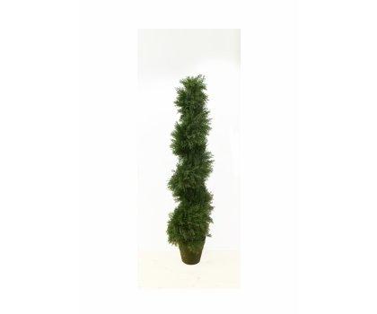Arbuste #1